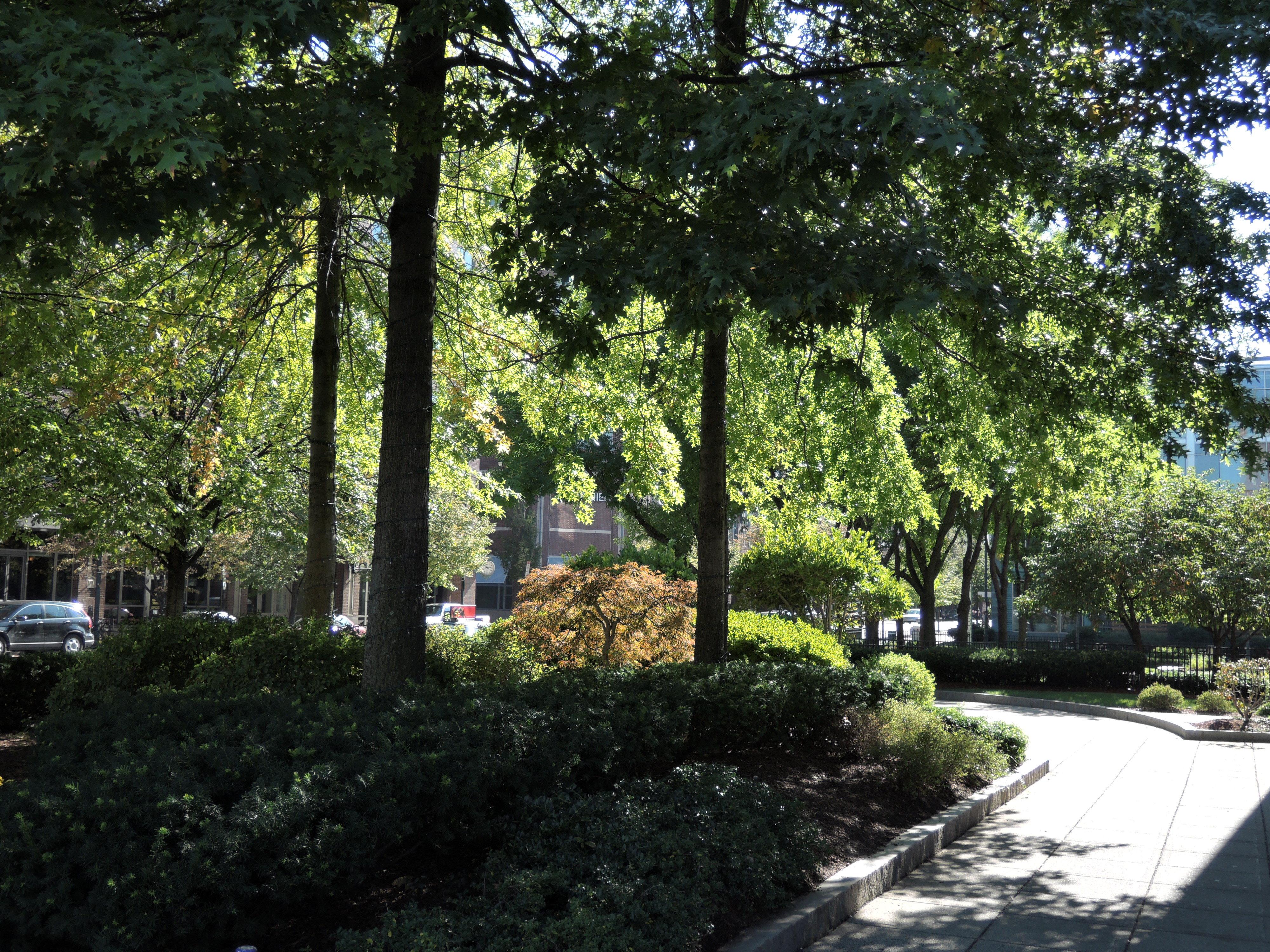 A sample photo of a park taken by the Nikon Coolpix P340.