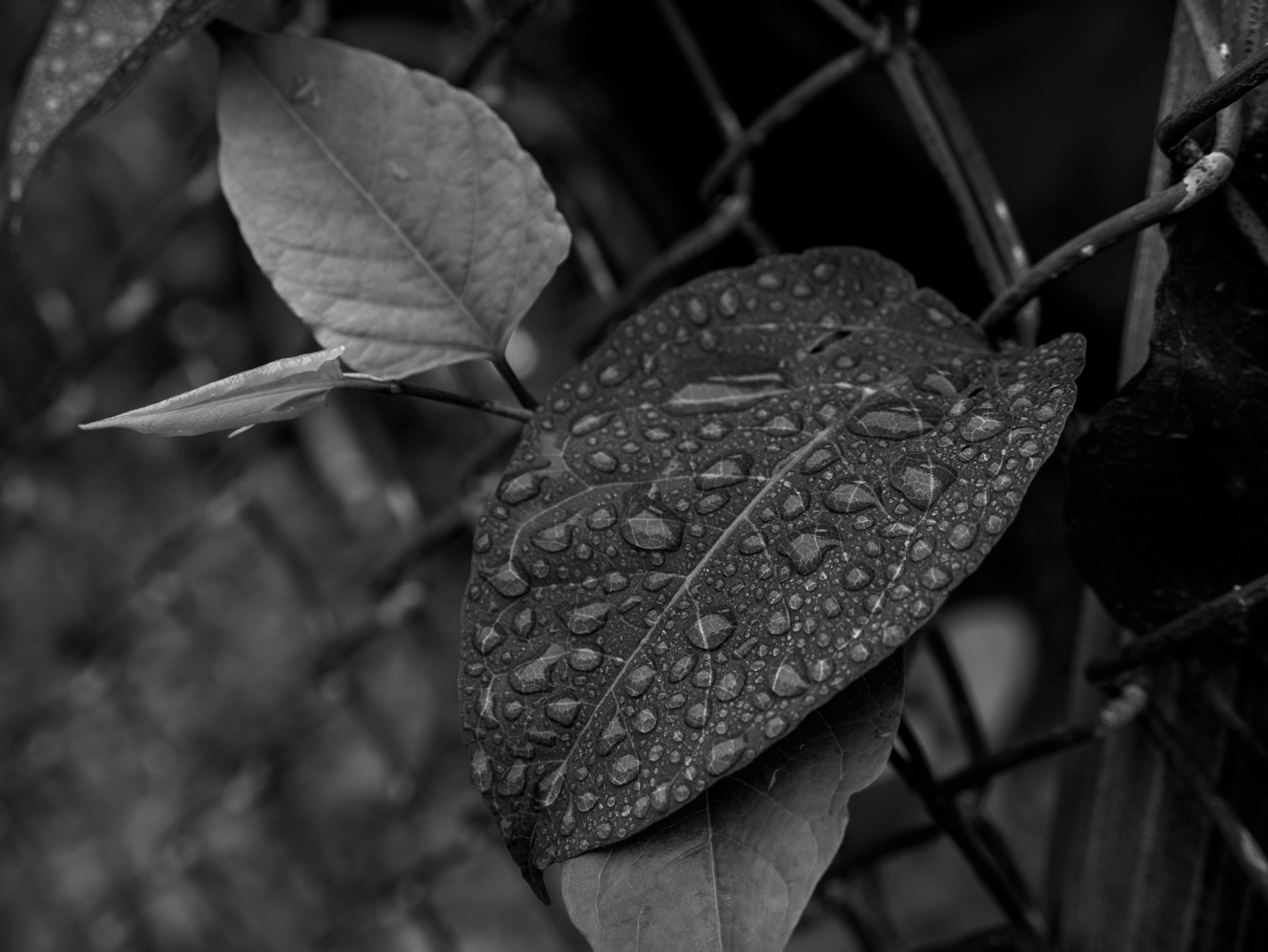 A photo taken by the Panasonic Lumix G7 of a leaf.