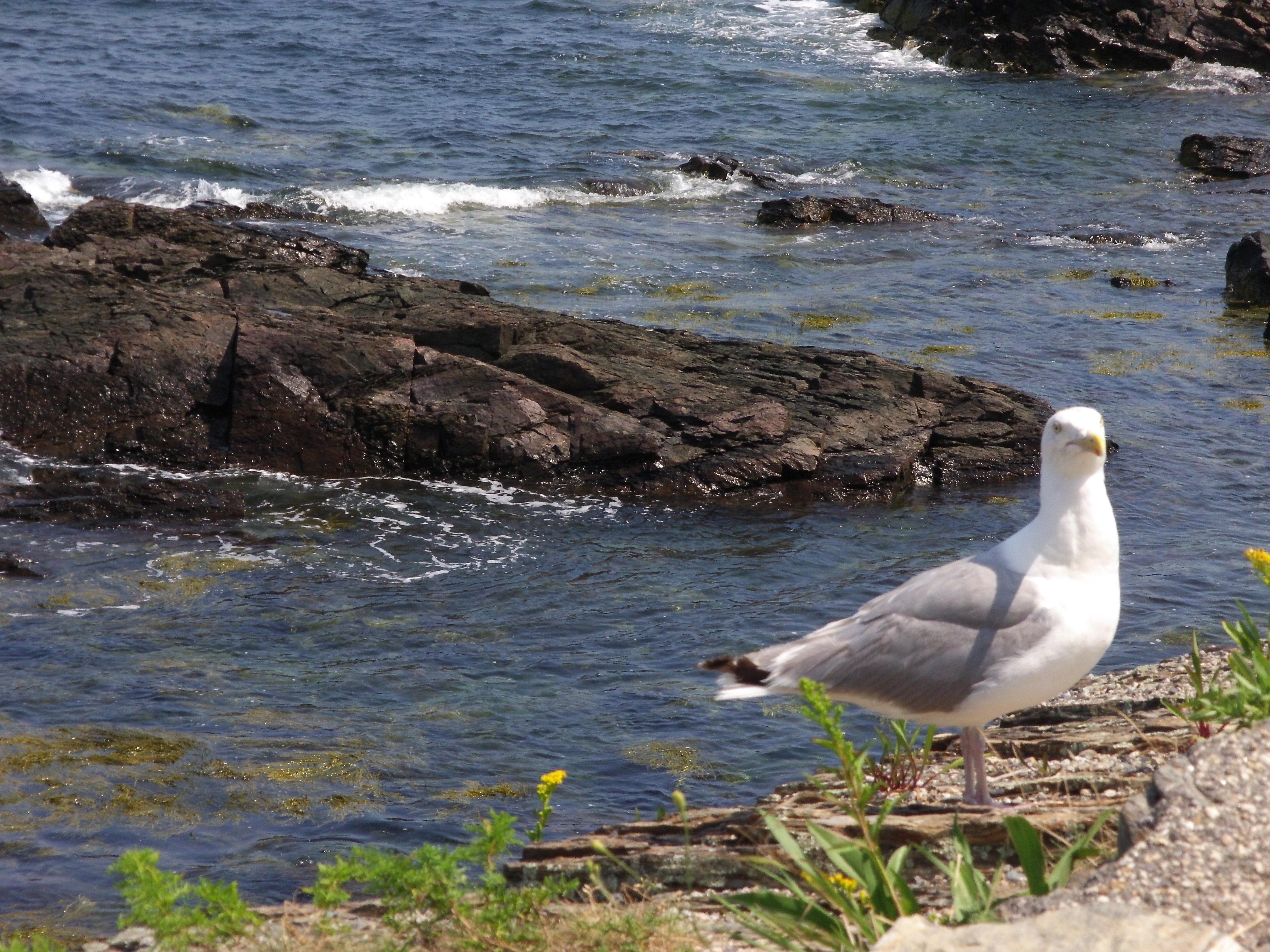 Seagull Sample