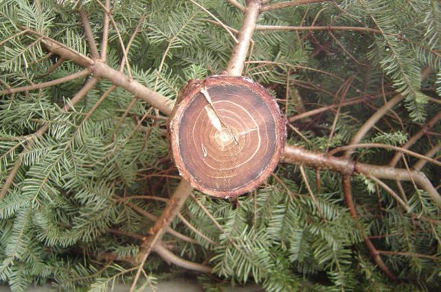 how to keep a cut christmas tree alive
