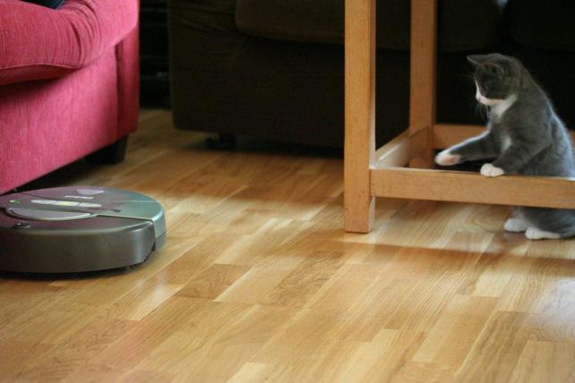 Cat vs Roomba