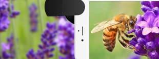 Smartphonelens