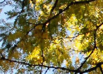 Nikon_D90_auto_trees1_web.jpg