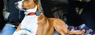 Whistle 3 lifestyle dog and human