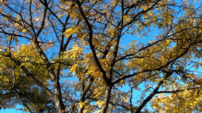 sanyo_vpc-HD1010_tree_web.jpg