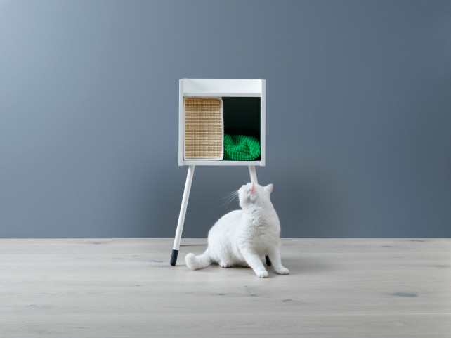 Ikea-cat-home