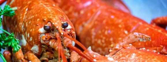 How to cook lobster hero flickr garryknight