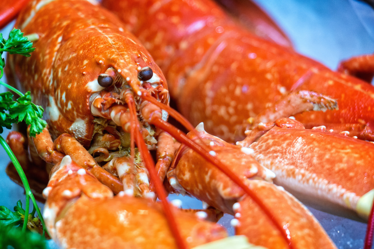 how to cook lobster reviewed com ovens