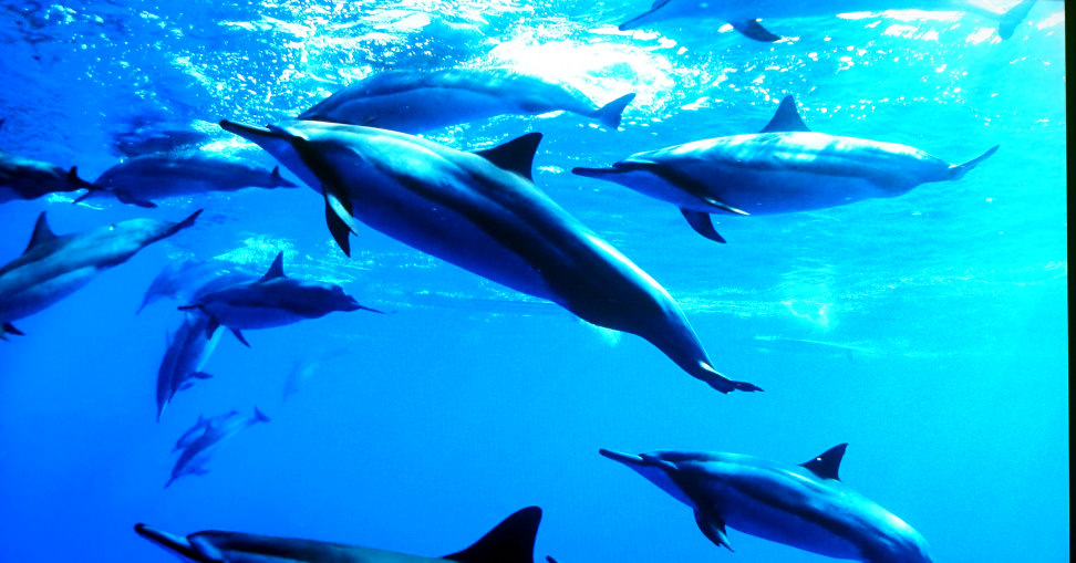 HDR-blue-dolphins-speculars