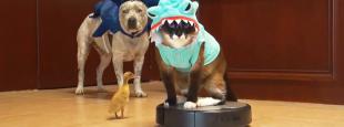 Animals on roombas hero