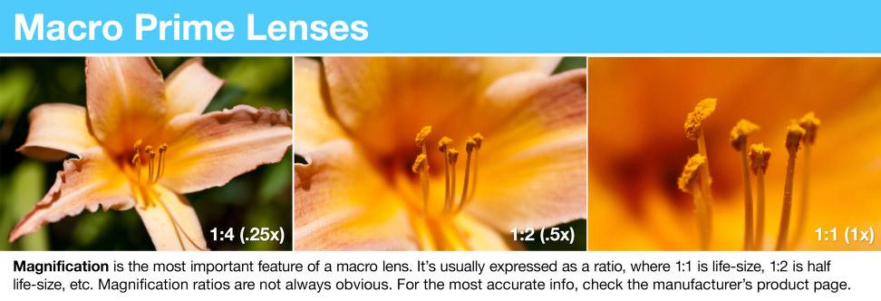 Macro Prime Lenses